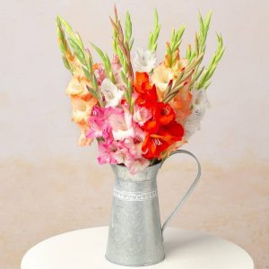 Buy her the Gladioli bouquet flowers for this anniversary gift